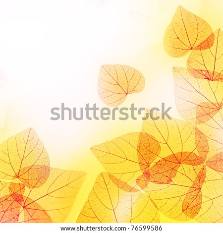 Sunny Autumn Floral Border of Red and Yellow Leaves