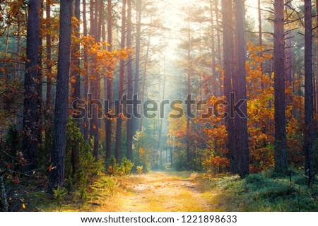 Sunny autumn forest. The warm autumn sun illuminates the path in the colorful autumn forest. Fall natural scene. Beautiful fall forest background.