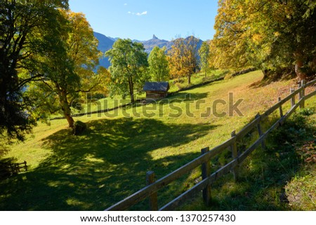 Sunny autumn rural mountains scene with the old wooden barn on the meadow near Swiss alpine village Wengen in Switzerland.