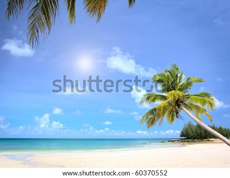 Sunny beach and palm tree