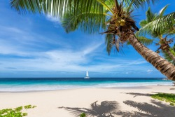 Sunny beach with coconut palm trees  on exotic Paradise island.