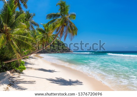 Sunny beach with palm trees and turquoise sea in Jamaica Caribbean island. Summer vacation and tropical beach concept.
