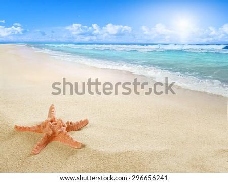 Stock Photo Sunny beach with starfish