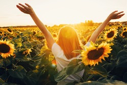 Sunny beautiful picture of young cheerful girl holding hands up in air and looking at sunrise or sunset. Stand alone among field of sunflowers. Enjoy moment