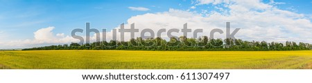 Sunny blossoming rapeseed field with tree line behind  #611307497
