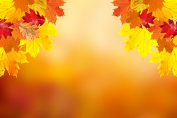 Sunny colorful fall season leaves on blurry bokeh nature copy space background. Selective focus used.