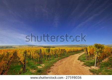 Sunny Country Road in French Vineyard