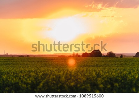 Sunny dawn in a field. Beutiful landscape. Gorgeous sunset #1089515600
