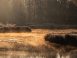 Sunny dawn on a foggy swamp. Evening sun rays on the dry grass growing in the swamp. Soft focus.