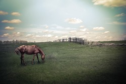 Sunny day in countryside. Summer landscape with horse at pasturage under blue cloudy sky. Nature background in vintage style