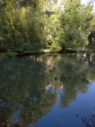 Sunny day in September. Ducks swim in the pond. The blue sky and green trees are reflected in the water.
