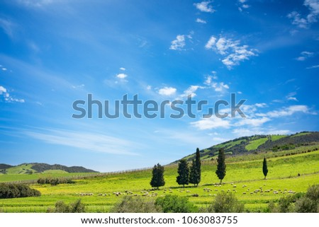 Sunny day in spring with hill covered by grass and tree