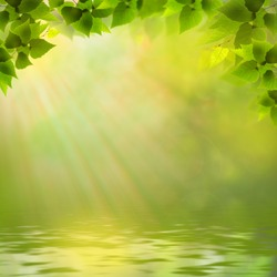 Sunny day on the forest lake, abstract natural backgrounds