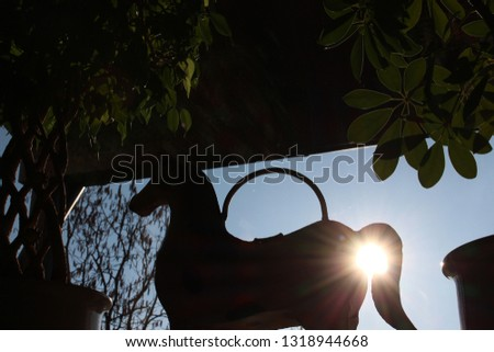 Sunny Day Sunset Nature Indoor to Outdoor Indoor and Outdoor Mixed
