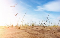 sunny empty idyllic baltic sea beach, sand dune , dune grass and flying seagulls against sun light, close up of a decorative coast landscape