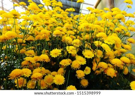 sunny flowers for sunny days #1515398999