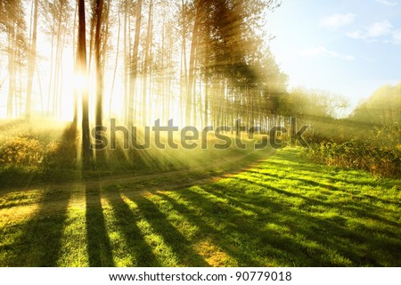 Sunny forest early in the morning - stock photo