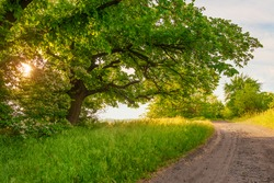 Sunny forest meadow. Curved dirt road and big old trees on the sunny forest meadow