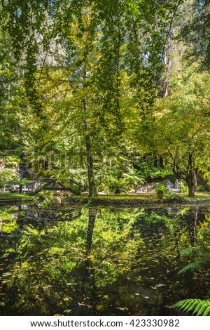 sunny garden reflections autumn fern tree gully Mt Dandenong   EZ Canvas