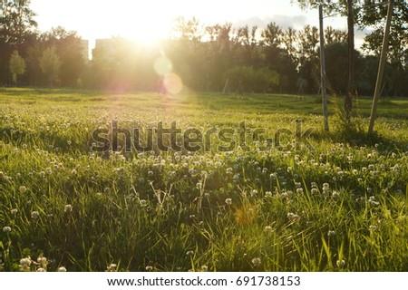 sunny meadow #691738153