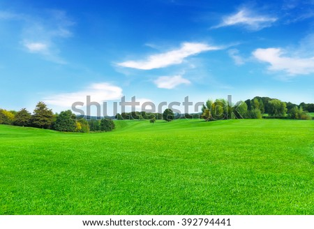 Sunny meadow and blue sky