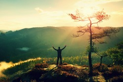 Sunny morning. Happy hiker with hands in the air stand on rock bellow pine tree. View over misty and foggy morning valley to Sun.
