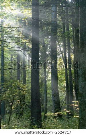 Sunny morning in the deciduous forest,middle europe, poland, bialowieza forest