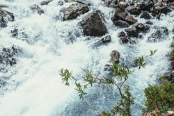Sunny nature background with branch of willow tree above clear azure water surface of turbulent mountain creek in blur. Beautiful bokeh from mountain stream among mountain flora. Willow tree branch.