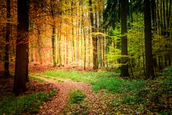 Sunny path in the forest in Europe