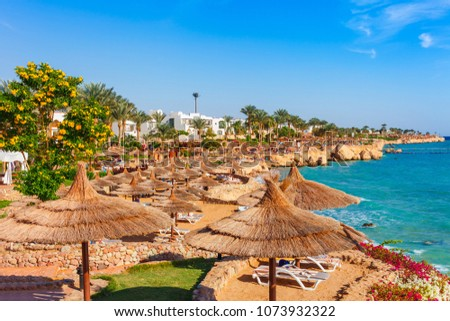 Sunny resort beach with palm tree at the coast shore of Red Sea in Sharm el Sheikh, Sinai, Egypt, Asia in summer hot. Bright sunny light #1073932322