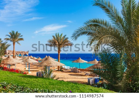 Sunny resort beach with palm tree at the coast shore of Red Sea in Sharm el Sheikh, Sinai, Egypt, Asia in summer hot. Bright sunny light #1114987574