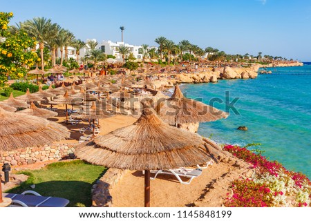 Sunny resort beach with palm tree at the coast shore of Red Sea in Sharm el Sheikh, Sinai, Egypt, Asia in summer hot. Bright sunny light #1145848199