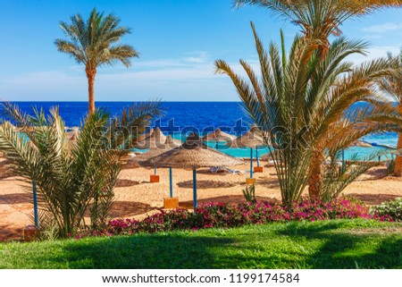 Sunny resort beach with palm tree at the coast shore of Red Sea in Sharm el Sheikh, Sinai, Egypt, Asia in summer hot. Bright sunny light #1199174584