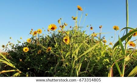 Sunny Sky #673314805