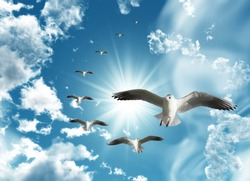 sunny sky and seagulls descending down