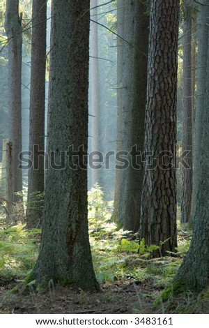 Sunny summer morning in the forest.