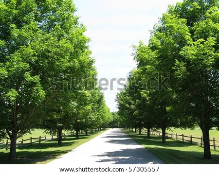Stock Photo sunny tree lane on a bright summer's day
