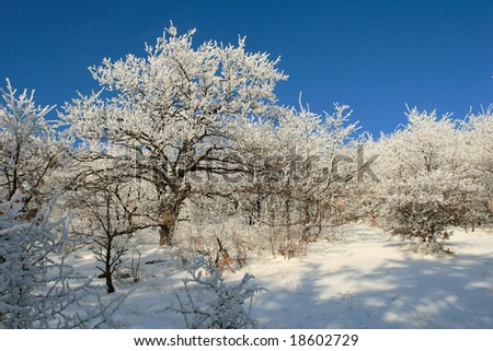 Sunny winter day in a christmas forest