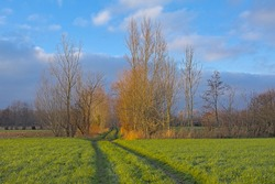 Sunny winter farm landscape with  willow trees in Oude Kale nature reserve, Flanders, Belgium