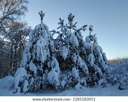 sunny winter landscape #1285183051