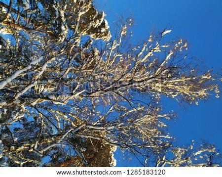 sunny winter landscape #1285183120