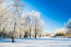 Sunny winter landscape in Russia: frozen trees in forest full of snow and bright sunlight coming above.