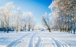 Sunny winter landscape in Russia: frozen trees in forest full of snow, dirt road and bright sunlight coming above.