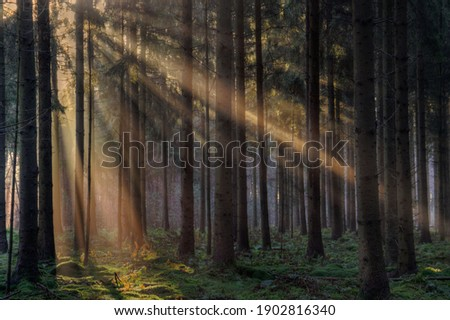 Sunrays in a forest on a hazy morning in winter, a fairy landscape Foto stock ©