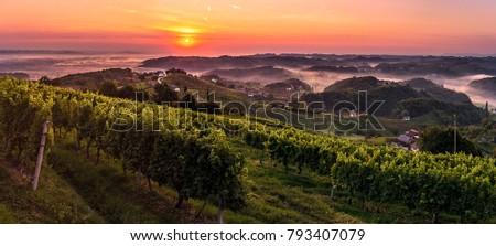 Sunrise above wineyard in Haloze region in Slovenia. Haloze region is wine country.