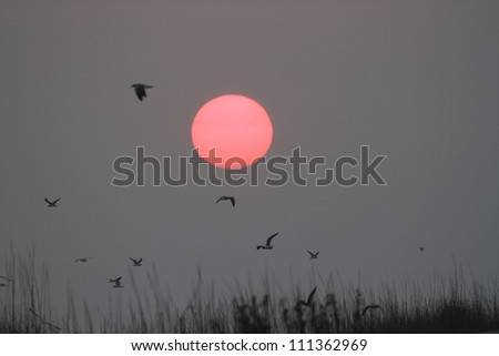Sunrise and Birds