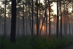 Sunrise and foggy in the forest