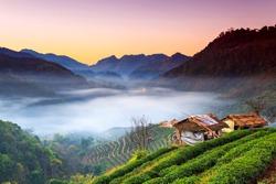 Sunrise and foggy mountain view of tea plantation at Doi Ang Khang, Chiang Mai, Thailand.