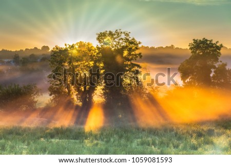 Stock Photo Sunrise and sun rays bursting through some trees.
