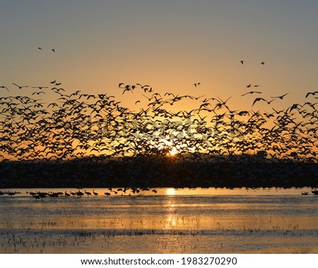 Sunrise at Bosque Del Apache National Wildlife Refuge watching the Sandhill cranes depart Foto stock ©